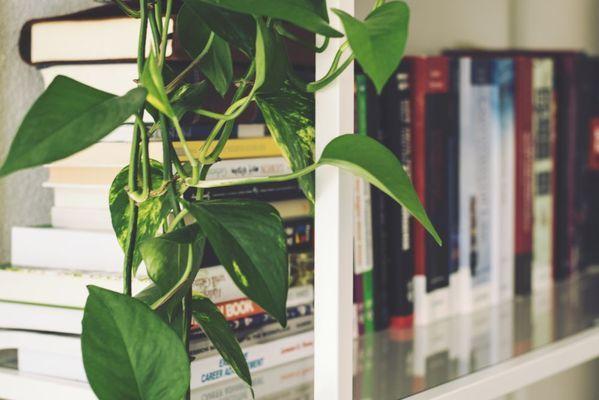 Les plantes peuvent même être un complément à votre bibliothèque