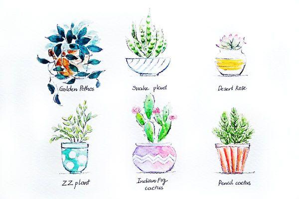 Un exemple des plantes que vous pouvez utiliser