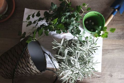 Intégrer les plantes dans son intérieur